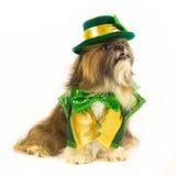 Собака дня St. Patrick Стоковые Изображения RF
