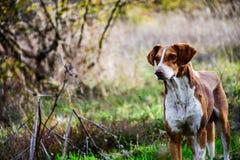 Собака овец стоковое фото rf