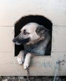 Собака овец Стоковое Изображение