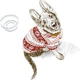 Собака одетая в пуловере Стоковое фото RF