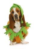Собака одетьнная вверх на halloween стоковое фото rf