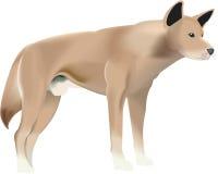 собака одичалая Стоковая Фотография RF