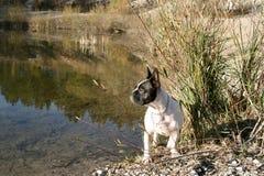 собака озера бортовая стоковое фото rf