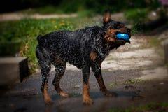 Собака около воды стоковые изображения rf