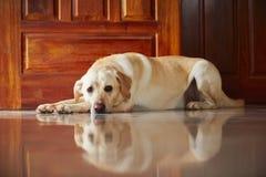 Собака дома стоковые изображения
