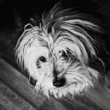 Собака дома стоковые фото
