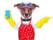 Собака домохозяйки Стоковая Фотография RF