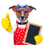 Собака домохозяйки Стоковые Фото