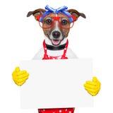Собака домохозяйки стоковые изображения