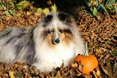собака осени стоковая фотография