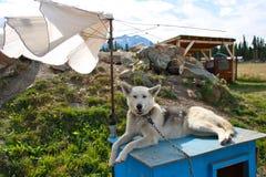 Собака ослабляя Стоковые Фотографии RF
