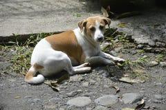 Собака отдыхая в задворк стоковое фото rf