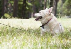 Собака отдыхая в парке Стоковое Изображение