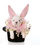 Собака одетая как кролик Стоковая Фотография
