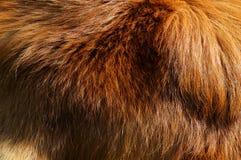 собака пальто Стоковые Изображения RF