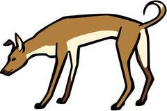 Собака парии бесплатная иллюстрация