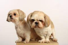 собака пар Стоковые Изображения