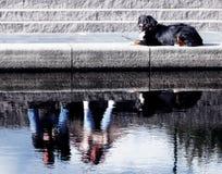 собака пар Стоковые Изображения RF