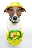 собака пасха Стоковая Фотография