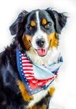 собака патриотическая стоковое изображение