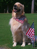 собака патриотическая Стоковое фото RF