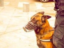 Собака патруля Стоковое Изображение