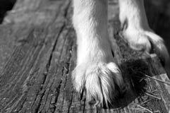 Собака пересекая мост Стоковые Фотографии RF