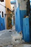 собака переулка стоковое фото rf