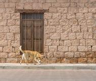 Собака перед кирпичным зданием с деревянной дверью Стоковые Изображения RF