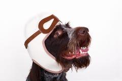 Собака пилот Стоковые Фото