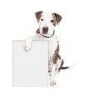 Собака питбуля держа пустой знак Стоковое Изображение RF
