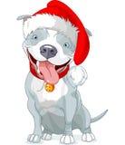 Собака питбуля рождества Стоковая Фотография