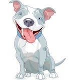 Собака питбуля Стоковое Изображение