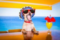 Собака питья коктеиля на каникулах летнего отпуска пляжный клуб Стоковая Фотография