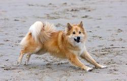 собака пляжа стоковая фотография