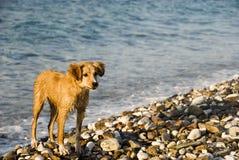 собака пляжа Стоковое фото RF