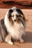 собака пляжа Стоковые Изображения RF