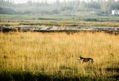Собака побежала в траве Стоковые Изображения RF
