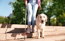 Собака-поводырь помогая слепому человеку с длинной тросточкой идя вниз с лестниц стоковые фотографии rf
