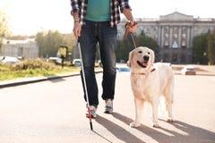 Собака-поводырь помогая слепому человеку с длинный идти тросточки стоковые фотографии rf