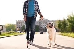 Собака-поводырь помогая слепому человеку с длинный идти тросточки стоковая фотография