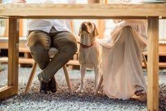 Собака под таблицей стоковое фото rf