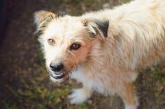 Собака покинутая племенником Портрет, конец-вверх стоковые фотографии rf
