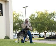Собака полиции K-9 атакует обработчик во время демонстрации Стоковые Фотографии RF