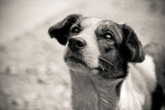 собака попрошайки стоковая фотография