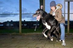 собака порочная Стоковое Фото