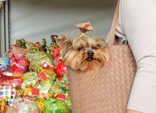 Собака портмона Стоковые Изображения RF
