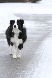 Собака потерянная в улице стоковая фотография rf
