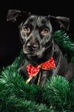 Собака праздника Стоковые Изображения