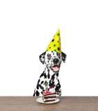 Собака празднуя день рождения Стоковые Фотографии RF